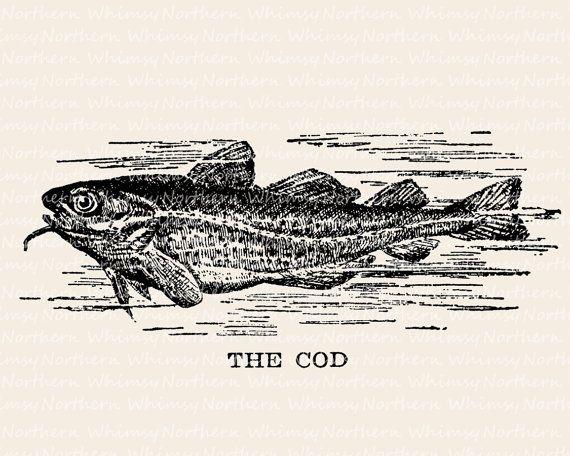 Image of cod